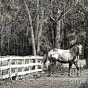 Coosaw - Outside The Fence Black And Wite Art Print