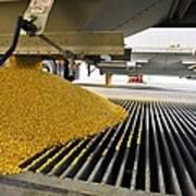 Corn At An Ethanol Processing Plant Art Print