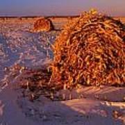 Corn Bales At Sunset, Dugald, Manitoba Art Print