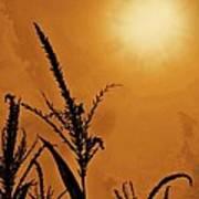 Corn Field Haze  Art Print