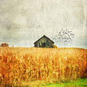 Corn Fields Of Kentucky Art Print by Darren Fisher
