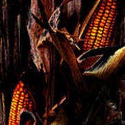 Corn Stalks Art Print