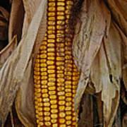 Corn Stalks Art Print