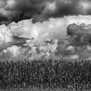 Cornfield And Clouds Art Print