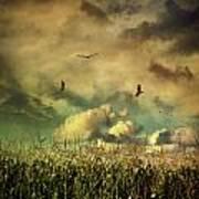 Cornfield In Summer With Dark Skies Art Print