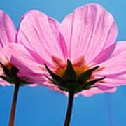Cosmia Flowers Pair Art Print