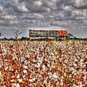 Cotton Field Art Print