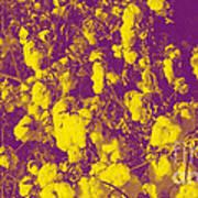 Cotton Golden Southwest Art Print