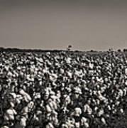 Cotton The Heart Of Dixie Art Print