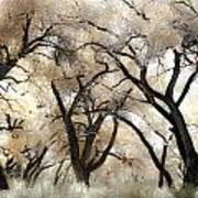 Cottonwood Trees Art Print by Denice Breaux