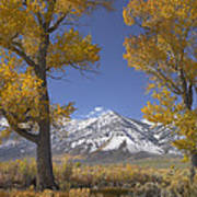 Cottonwood Trees Fall Foliage Carson Print by Tim Fitzharris
