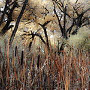 Cottonwoods And Cat Tails Art Print by Denice Breaux