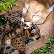 Cougar Mom Cleans Youngster Art Print