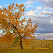 Country Autumn Landscape Print by James BO  Insogna