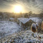 Country Snow And Sunrise Art Print by Yhun Suarez