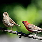 Courtship In Nature . 40d8073 Print by Wingsdomain Art and Photography