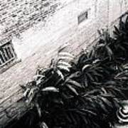 Courtyard Royal Street New Orleans Art Print