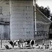 Cow Farm Art Print