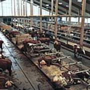 Cow Shed Art Print by Bjorn Svensson