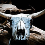 Cow Skull In Shade Art Print