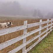Cows And Fog Art Print