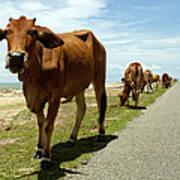 Cows At The Sea Art Print