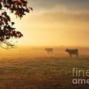 Cows In A Foggy Field Art Print