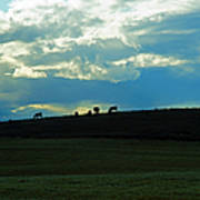 Cows On The Hill Art Print