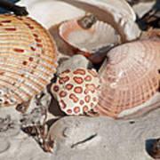 Crab Shell Art Print