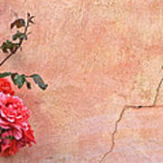 Cracked Wall And Rose Art Print