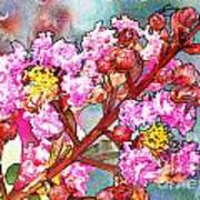 Crape Myrtle Blank Greeting Card Art Print
