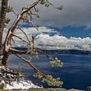 Crater Lake Pine Art Print
