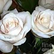 Creamy Roses I Art Print