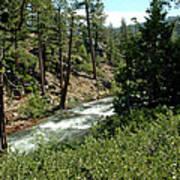 Creek Glen Alpine Creek Art Print