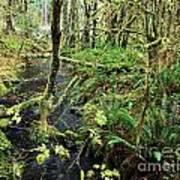 Creek In The Rain Forest Art Print