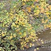 Creekside Gold 2012 Art Print