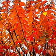 Crepe Myrtle Leaves In Autumn Art Print