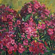 Crimson Phloxes Art Print