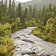 Crossing The Stream In Denali Art Print