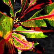 Croton Abstract I Art Print