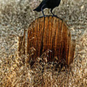 Crow On Old Wooden Grave Art Print