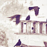 Crows On A Roof Art Print by Silvia Ganora