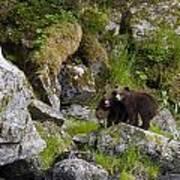 Cubs On A Rock Art Print