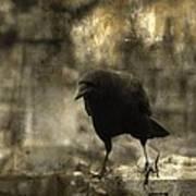 Curiosity Of The Graveyard Crow Art Print