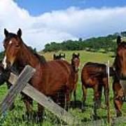 Curious Horses In Summer Art Print