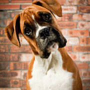 Cute Dog Art Print by Danny Beattie Photography