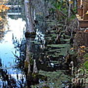 Cypress Knees And Trees Art Print