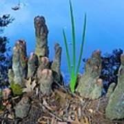 Cypress Knobs Art Print