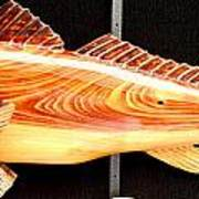 Cypress Red Fish Print by Douglas Snider