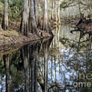 Cypress Reflections Art Print